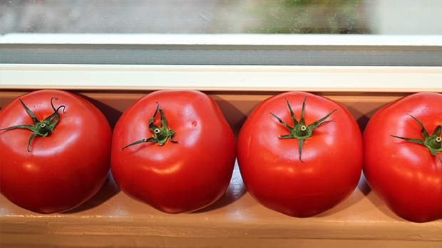 Keep Tomatoes Out in the Open!