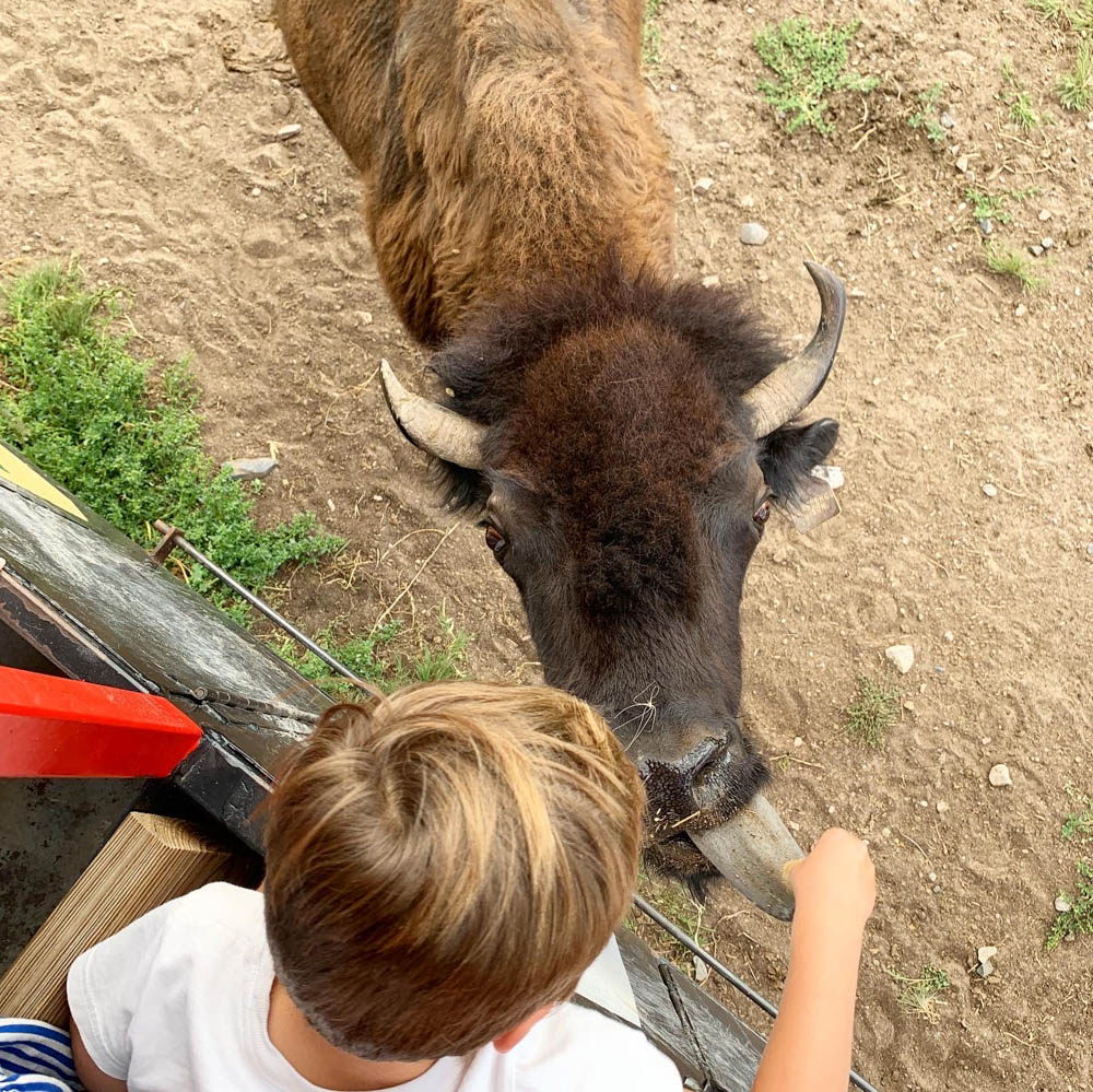 Things to Do in Cheyenne Wyoming Terry Bison Ranch