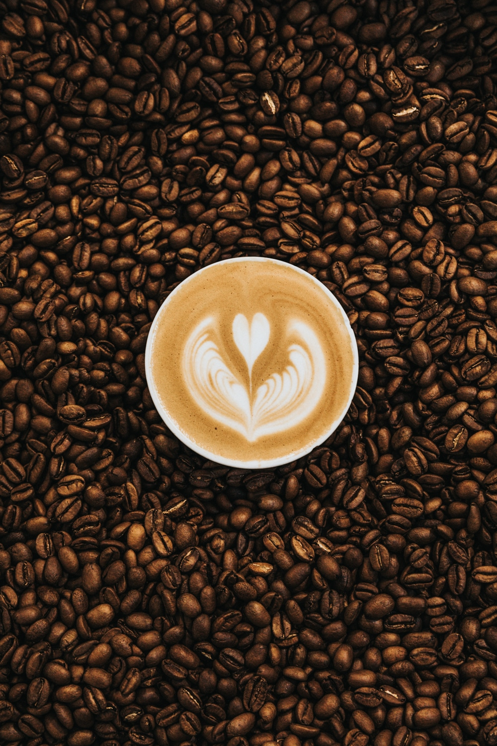 The Best Toxic Free Coffee | The Best Mold and Mycotoxin Free Coffee Brand